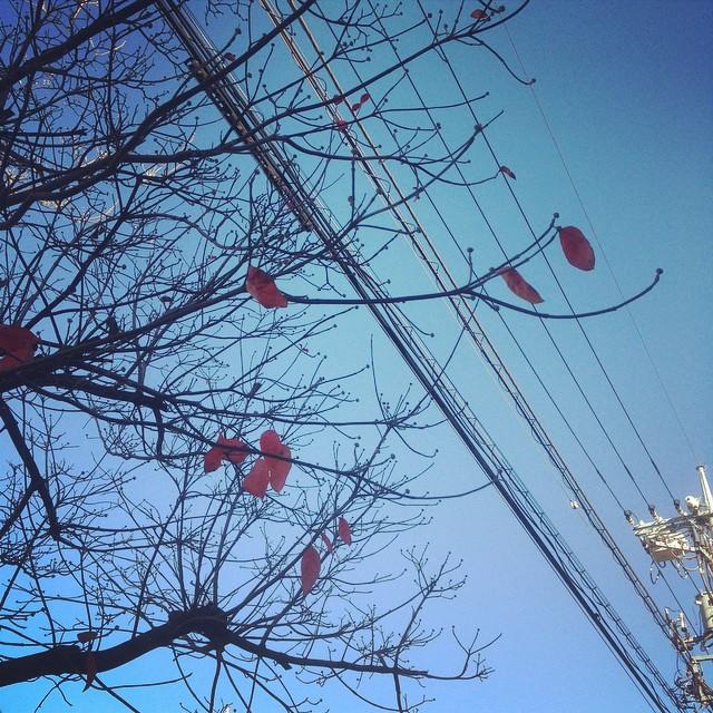[PH] on the street, Tokyo, Japan, 20141202