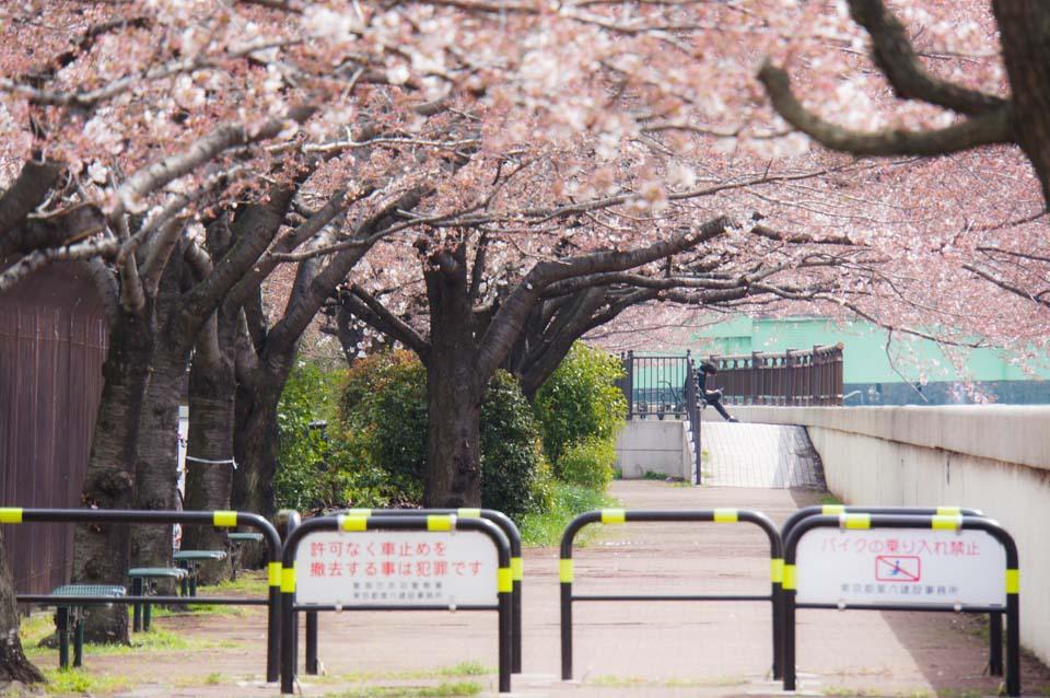 [PH] #cherryblossom #Tokyo #instagram March 28, 2015 at 10:38AM