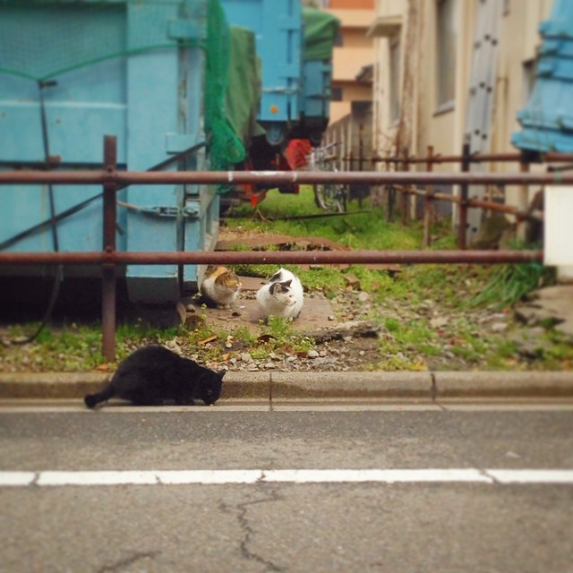 [PH] #cat #Tokyo #Japan #photooftheday #iphoneonly #photo April 11, 2015 at 02:15PM