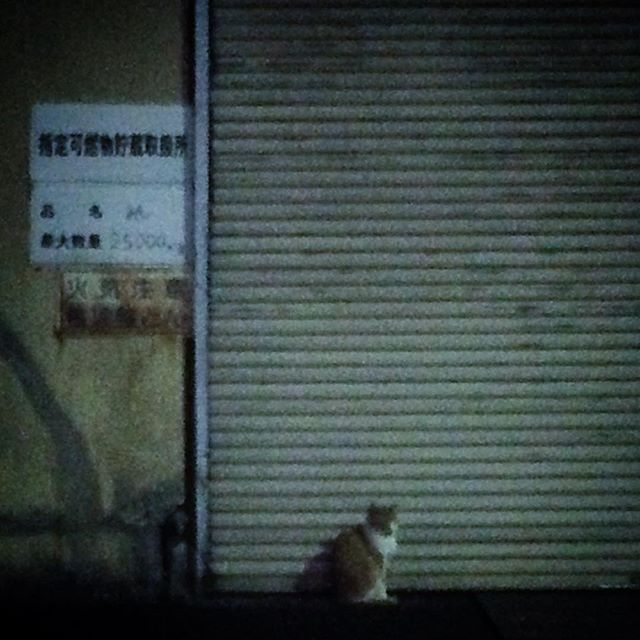 [PH] #cat #night #iphoneonly #photooftheday #follow #Tokyo #Japan #instagram July 09, 2015 at 07:42PM