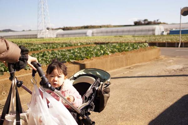 イチゴ狩り at三崎口 この日は割と寒かった