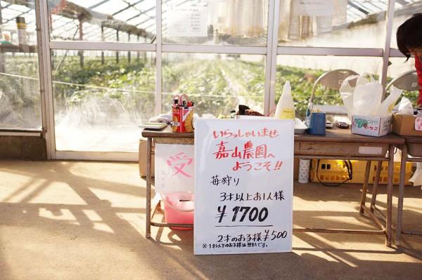 イチゴ狩り at三崎口 嘉山農園