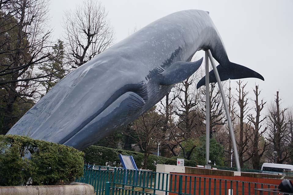 at上野 国立科学博物館 シロナガスクジラ